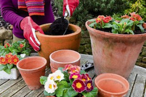Planting Spring Flowers in Terracotta Pots