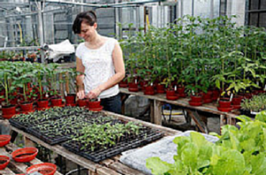 Research & Innovation - nursery