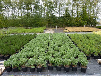 Part of growing media trial at Stoneyford nursery of Pat Fitzgerald