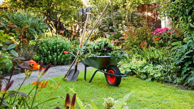 Bord na Móna Horticulture - Top Tips for Summer gardening